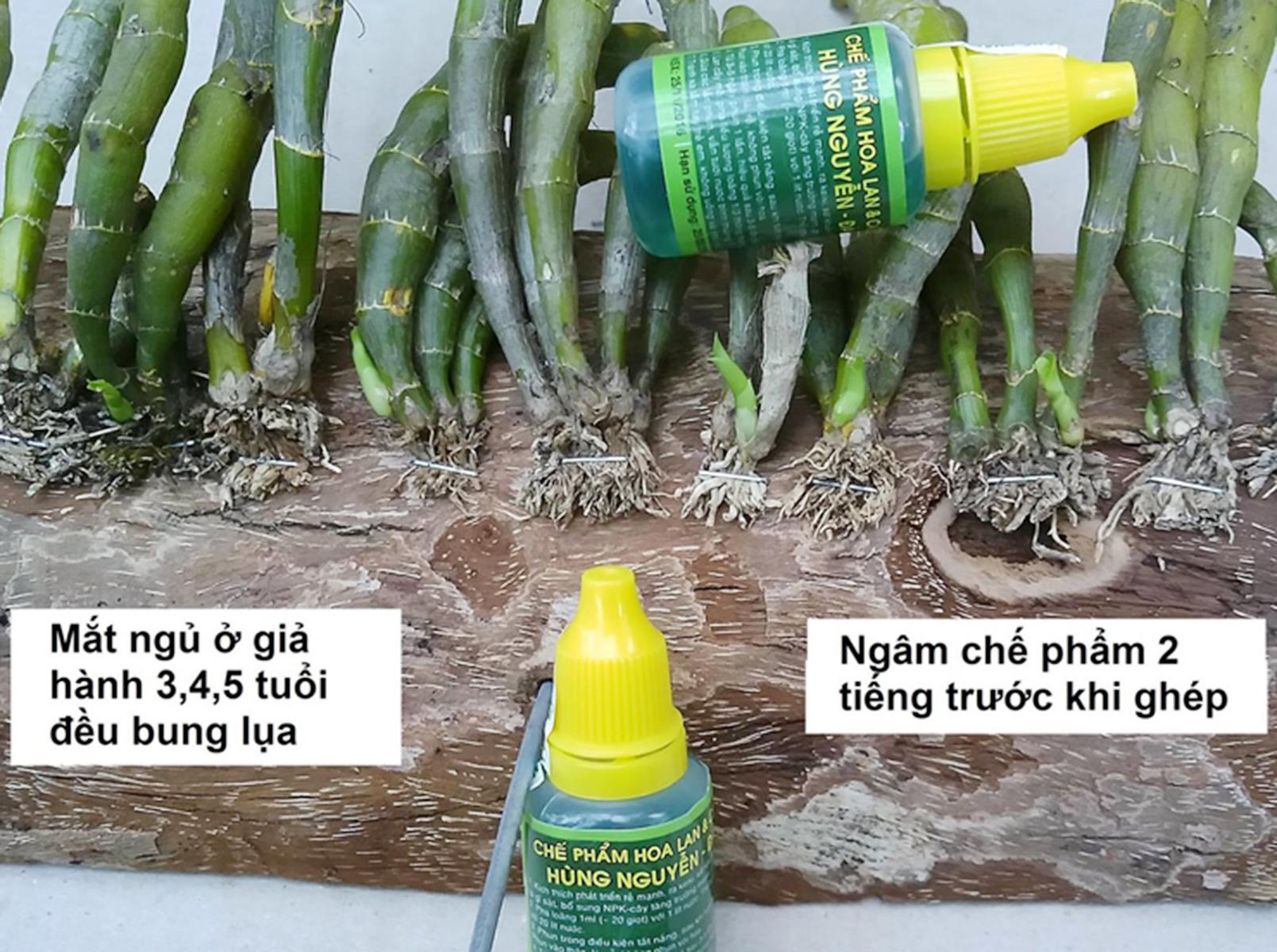 5 chai chế phẩm chăm sóc cây canh, phong lan Hùng Nguyễn-Đà Lat