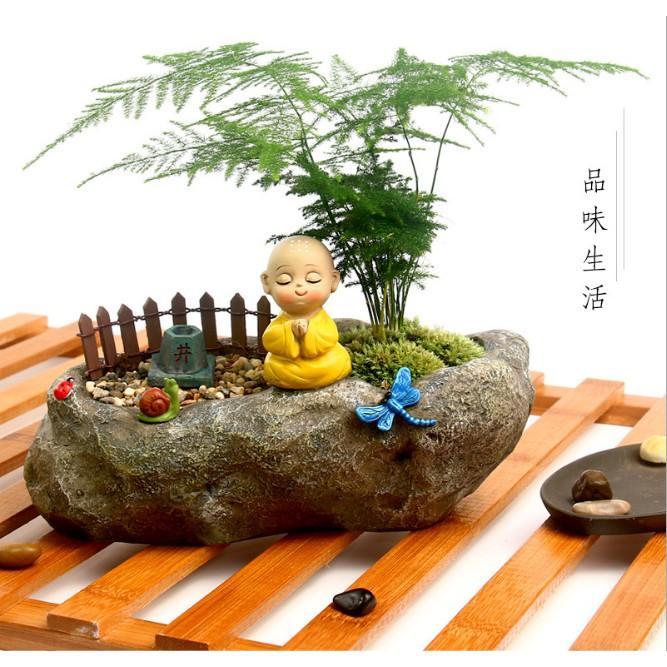 Hình ảnh Chậu Trồng Cây Dáng Thiền Sư Tâm Tịnh Vô Ưu - Cho Sen Đá- Bonsai