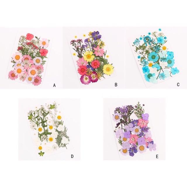 Hoa khô ép chuyên cho trang điểm