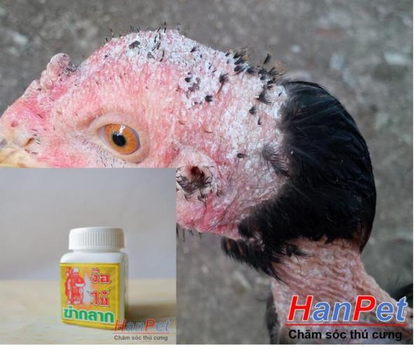 (Thuốc GÀ CHỌI) Trị nấm gà, mốc gà chọi, thuốc lác gà đá, dạng uống lọ 10viên MADEIN THAILAND (Hanpet moc uong)-HP10441TC