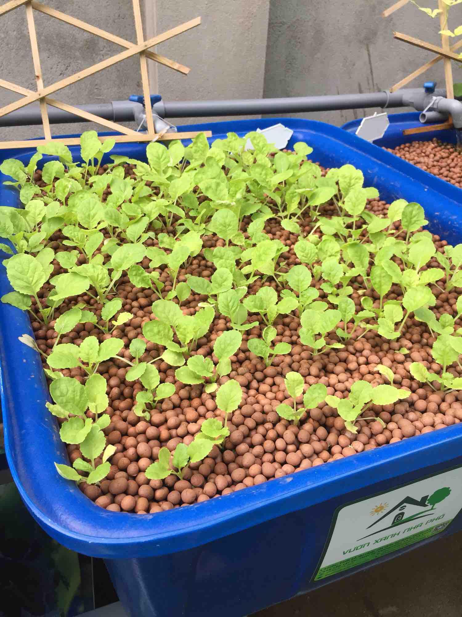 Đất sét nung Popper trồng hệ Aquaponics túi 6 lít size L ( 8-12 mm )