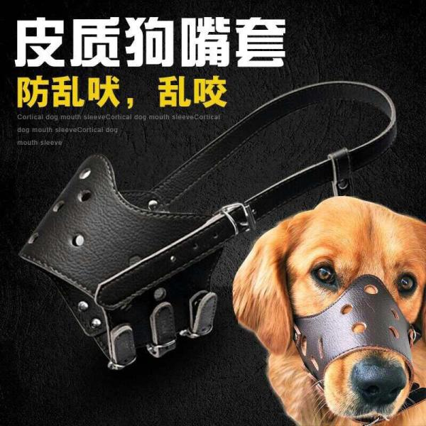 Dụng cụ an toàn cho chó