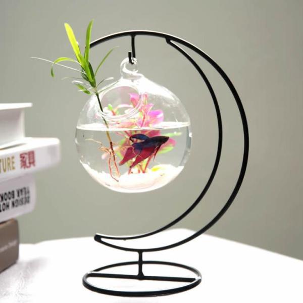 Bể cá mini để bàn treo cung trăng 12