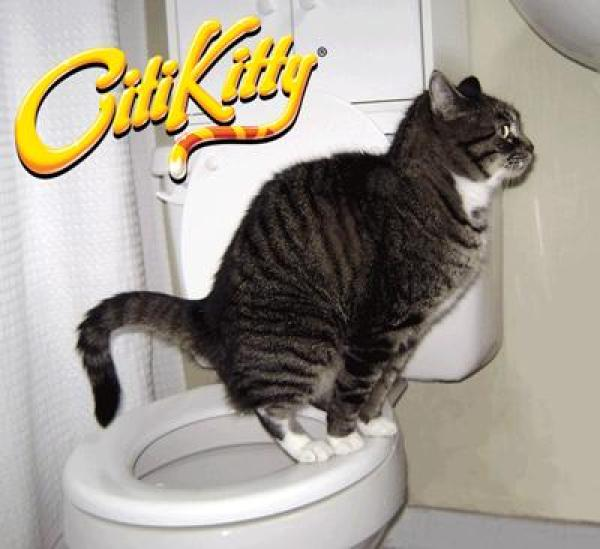 HCM-Bộ dạy mèo đi vệ sinh bồn cầu ( VS085) nắp bồn cầu cho mèo, huấn luyện mèo đi vệ sinh đúng chỗ / WC mèo / vệ-HP10388TC