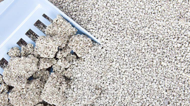Kết quả hình ảnh cho cát vệ sinh genki cafe