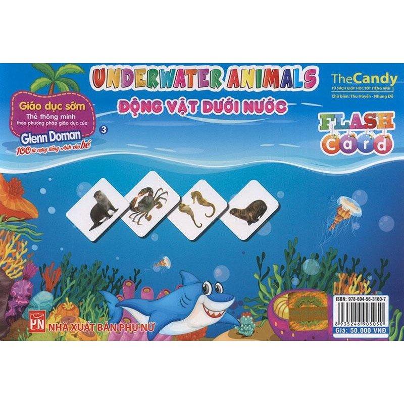 Mua Flashcard Underwater animals - Động vật dưới nước