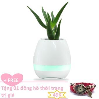 Bình trồng cây phát nhạc kết hợp loa Bluetooth, kiêm đèn ngủ+ Tặngđồng hồ thời trang