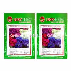 Bộ 2 gói Hạt giống hoa Cẩm tú cầu (Lucky)
