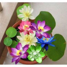 Bộ 3 gói hạt giống Hoa Sen Nhật Mini Mix (LOTUS) lucky