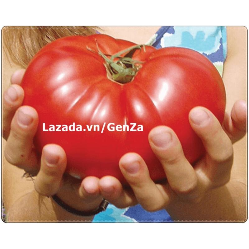 Hạt giống Cà chua khổng lồ - Giống chất lượng cao, sai quả