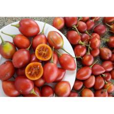 Hạt giống Cà chua thân gỗ sai quả