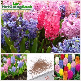 Hạt giống hoa ông tiên, nhiều màu - 10237027 , EO902HLAA4102YVNAMZ-7253303 , 224_EO902HLAA4102YVNAMZ-7253303 , 79000 , Hat-giong-hoa-ong-tien-nhieu-mau-224_EO902HLAA4102YVNAMZ-7253303 , lazada.vn , Hạt giống hoa ông tiên, nhiều màu