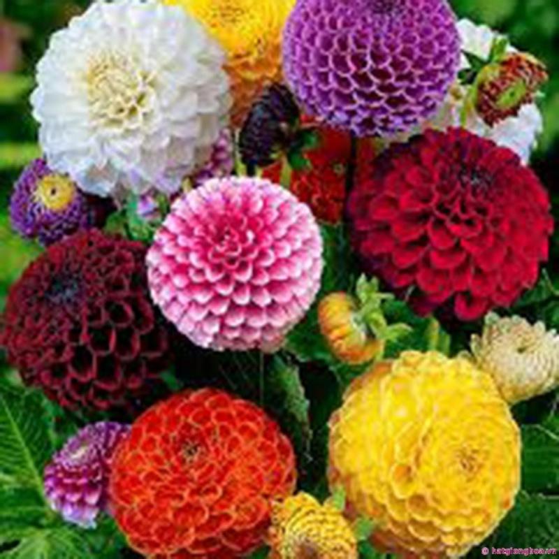 Hạt giống Tổ ong mix - Tặng kèm một viên kích thích nảy mầm