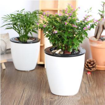 [HUGE] Bộ 5 chậu cây tự động tưới nước trắng tặng 1 gói phân trùnquế trồng cây