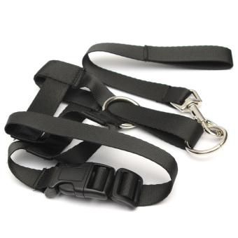 Mua Halti Head collar for Dogs (Size L) (Intl) giá tốt nhất