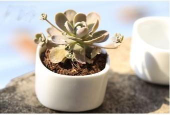 OJ white fleshy ceramic flowerpot - intl - 8539903 , OE680HLAA8A4TLVNAMZ-15939867 , 224_OE680HLAA8A4TLVNAMZ-15939867 , 229320 , OJ-white-fleshy-ceramic-flowerpot-intl-224_OE680HLAA8A4TLVNAMZ-15939867 , lazada.vn , OJ white fleshy ceramic flowerpot - intl