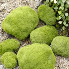 Simulation Of False Moss Simulation Of Bryophyte Stone Moss Flocking False Lawn Micro Landscape Decoration Accessories, Diameter: 6cm - intl