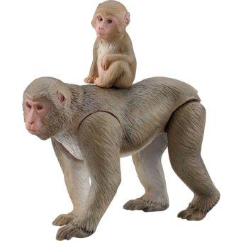 Mô Hình Khỉ.
