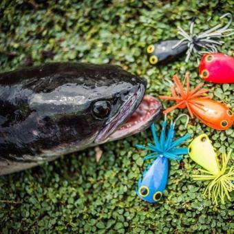 Mồi câu cá lóc hàng Thái