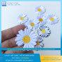Phụ kiện thời trang - Sticker Patch ủi quần áo balo thêu logo hoa cúc độc đáo S13
