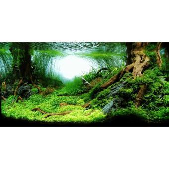 Tranh phông nền 3D dán hồ cá Aqua_013