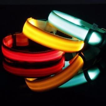 Dây đeo cổ dạ quang cho thú Pethome ACCC45-1L (nhiều màu) - Size L