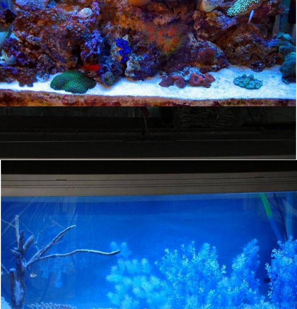 Cát Thạch Anh vật liệu lọc, trang trí bể cá, hồ thủy sinh (túi 200gr) 11